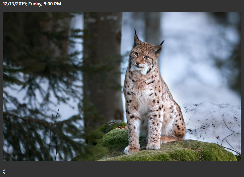 Lynx fever (and the microblog)